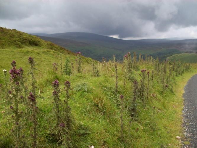 Wickklow Mountain Roadside