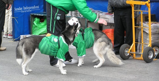 These dogs will probably face repercusions if the wúf instead of woof, following the reports.