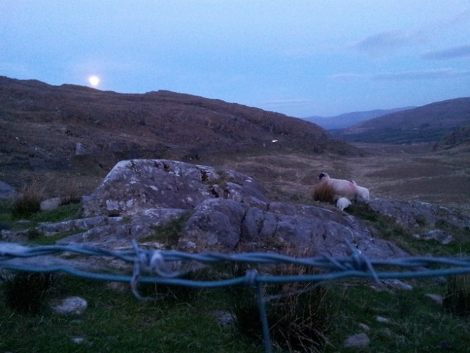 Sheep watching the moon rising over the hills near Killarney/Cill Áirne in County Kerry, Ireland.