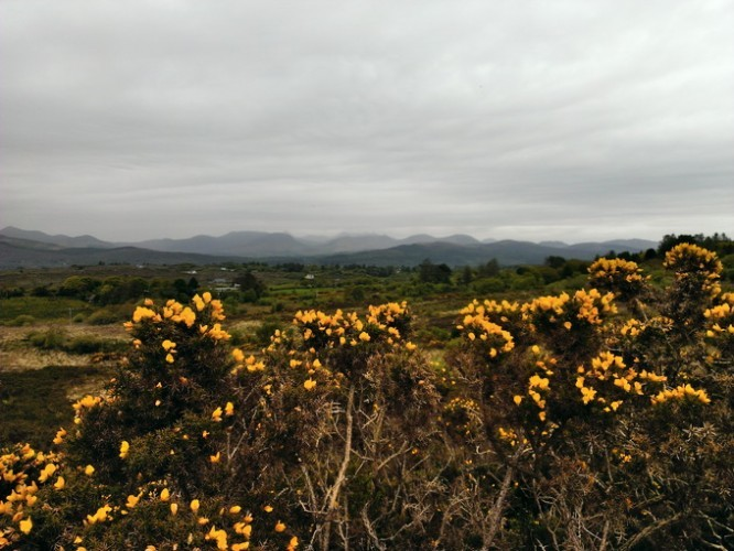 An overcast, yet warm and humid day, with a view over gorse bush.