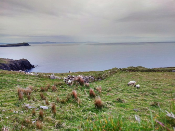 More sheep, more views. A very calm day over the sea.
