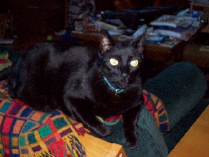 Don't feel bad, kitty! In Ireland, black cats are considered lucky! In loving memory of my Irish-speaking kitty Jonah, 2004 - 2011.